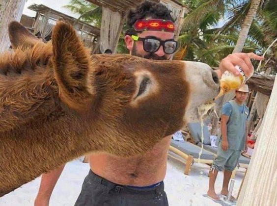 arturo-islas-allende-burro-rescate-hotel-tulum-faceb.jpg2_-564x420